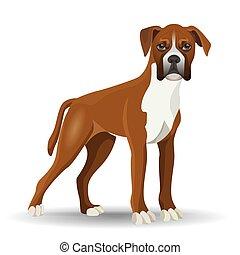 vetorial, isolado, cachorro branco, cheio, ilustração, comprimento, pugilista