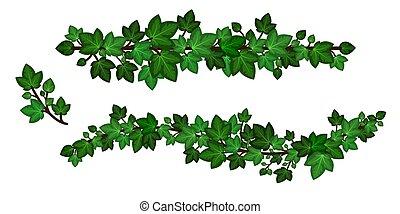vetorial, ondulado, style., verde, liana., caricatura, experiência., jogo, folhas, grinalda, hera, ramos, isolado, branca, guirlandas, elemento decorativo, ilustração, desenho