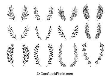 vetorial, ramos, elements., vindima, set., mão, grinaldas, ornamentos, laurel, floral, desenhado