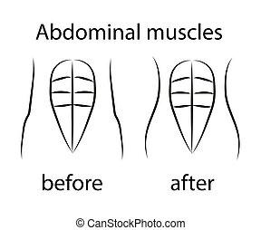 vetorial, silhouette., muscles., abdominal, corporal, press., human