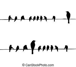 vetorial, silhuetas, fio, pássaros