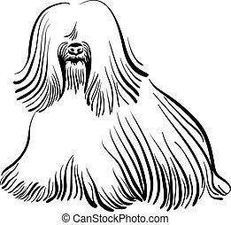 vetorial, tibetan, raça, terrier, cão