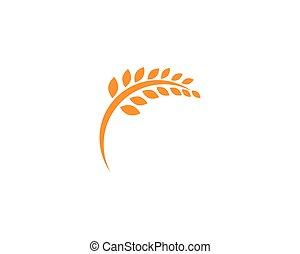 vida, modelo, logotipo, ícone, vetorial, saudável, trigo, agricultura