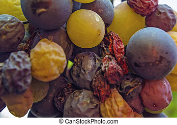 videira, vinhedo, uvas, grupo