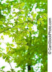 vigas, folhas, verde, trough, fundo, brilhar sol