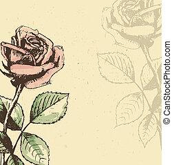 vindima, fundo, rosas