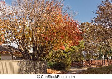 vizinhança, outono, secado, casa, folhas, eua, texas, telhado, entrada carro, residencial