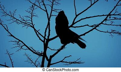 voando, noite, desligado, pássaros, ramo