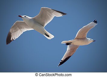 voando, pássaros