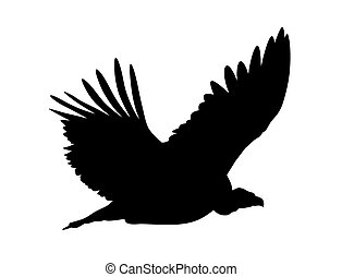 vulture, griffon
