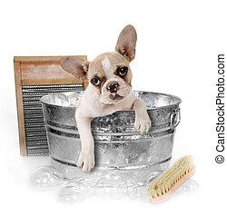 washtub, banho, estúdio, cão, obtendo