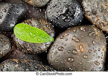 zen, freshplant, pedras, gotas, água